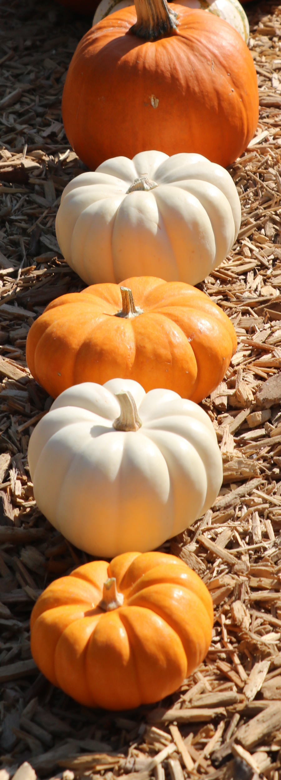 preschool pumpkins pumpkin circle the story of a garden by george